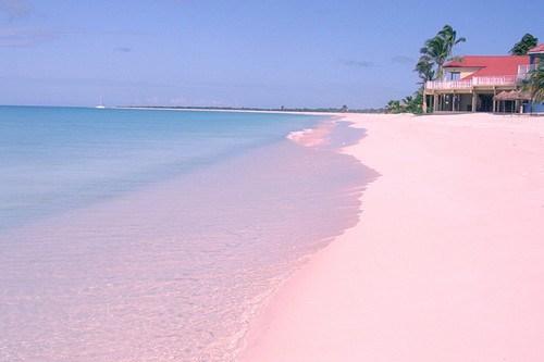 Barbuda pink sand