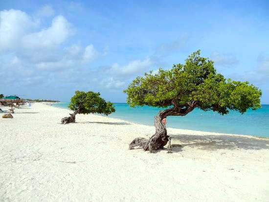 Eagle Beach, Aruba I These Are the Top 15 Beaches in the World Right Now, According to TripAdvisor I {un}covered