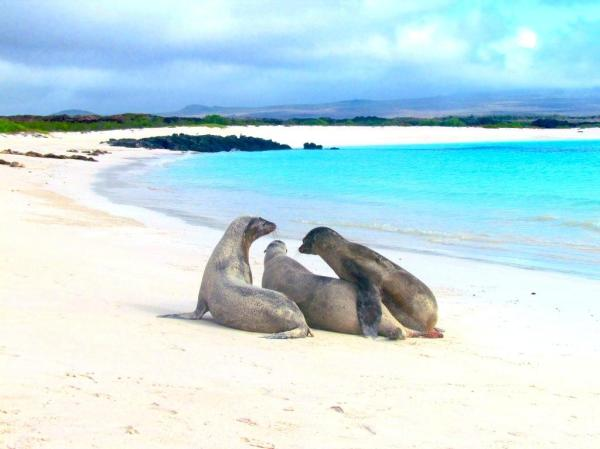 Galapagos Beach at Tortuga Bay Puerto Ayora, Ecuador I These Are the Top 15 Beaches in the World Right Now, According to TripAdvisor I {un}covered 2017