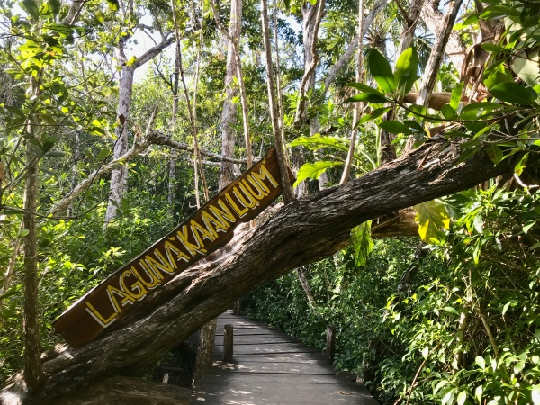 How to Visit Laguna Kaan Luum: A Hidden Oasis in Tulum, Mexico / Traveling Lamas / photo by @travelinglamas